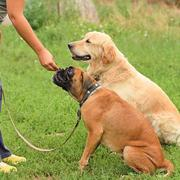 JR Best Dog Training Services